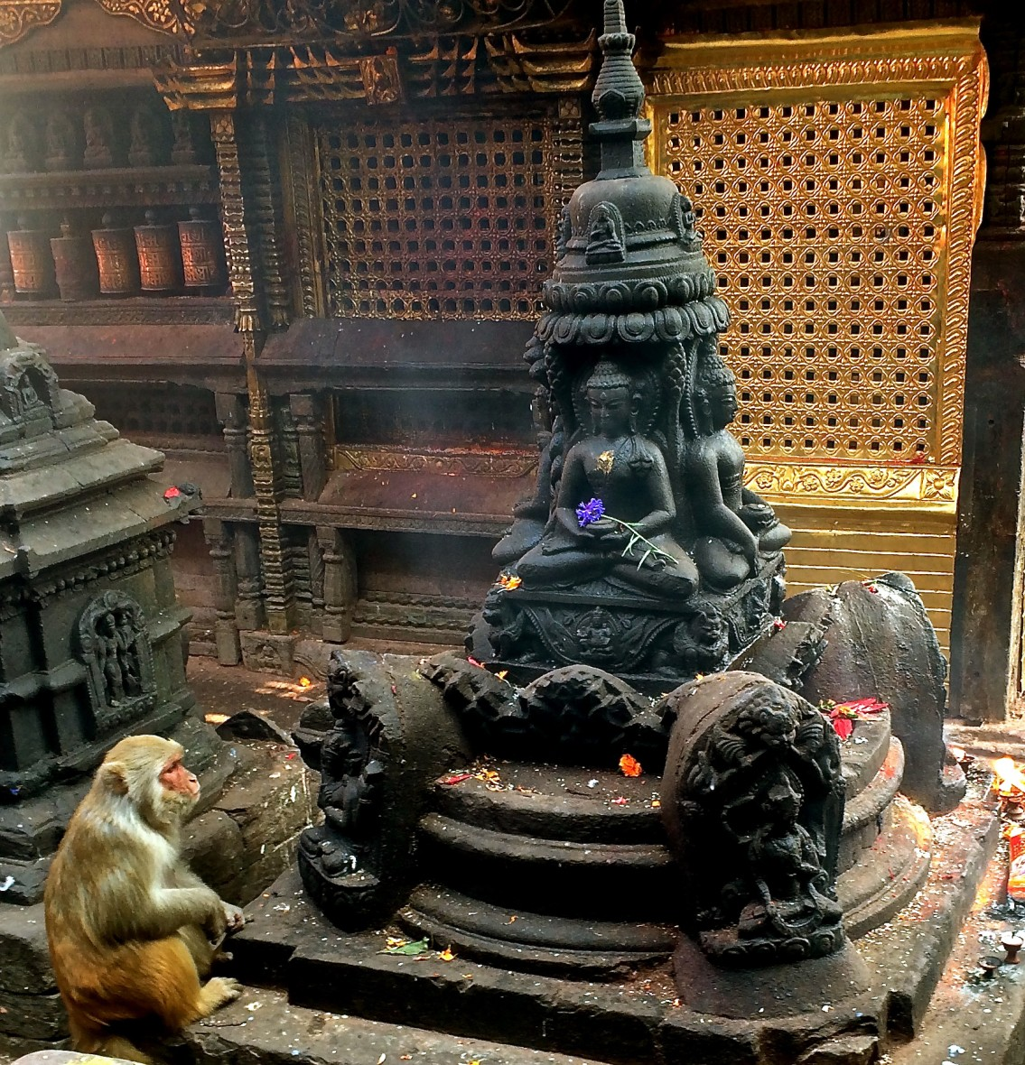 monkey in a temple
