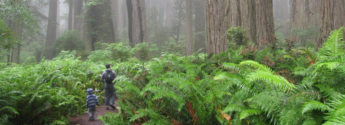 Matt Nelson in forest with son